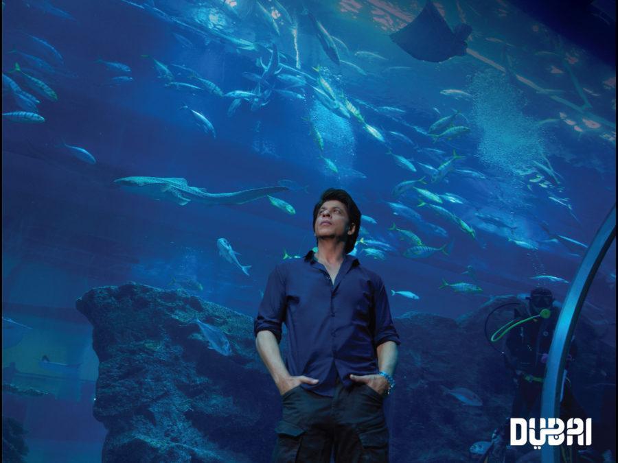 srk in dubai aquarium